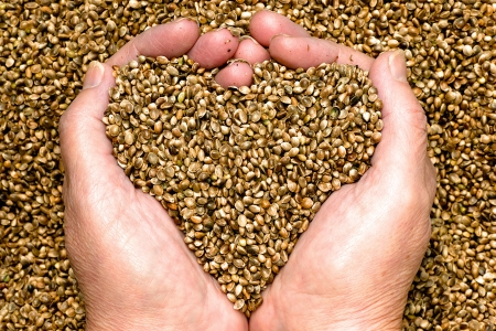 Hemp seeds held by woman hands, shaping a heart