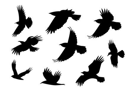 Illustration pour Set of silhouette flying raven bird with no leg. vector - image libre de droit