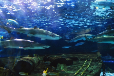 Black Tip Sharks Mural Wallpaper