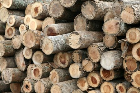 Recently cut trees are stacked at the sawmill.