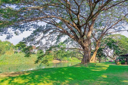 Foto de The wooden swings hanging under a big trees in a park beside the river in the morning. - Imagen libre de derechos