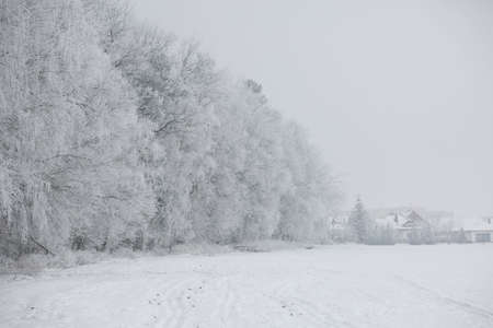 Photo for Gorgeous winter landscape with snow and fog, Pardubice, Czech republic. - Royalty Free Image