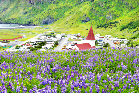 Beautiful Vik church surrounded by blooming lupine flowers in summer Vik, Iceland