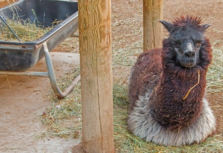 The Zoo in Sioux Falls, South Dakota is a family friendly Attraction for all Ages