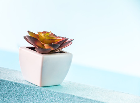 Flowerpot white color and young plant for design or decorate project.