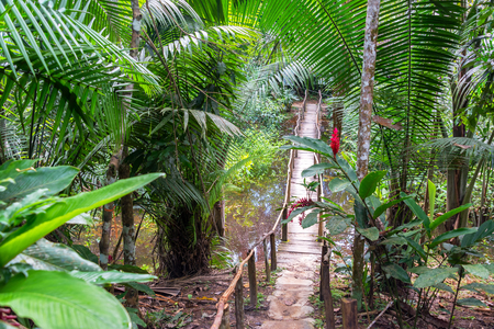 Small wooden bridge in a lush green rain forest near Iquitos, Peru