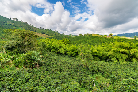 Landscape of a hills covered in coffee plants in the coffee triangle region of Colombia near Manizales