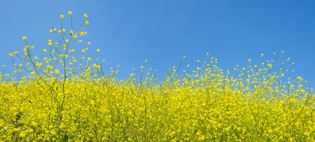 Wildflowers in a field in summer
