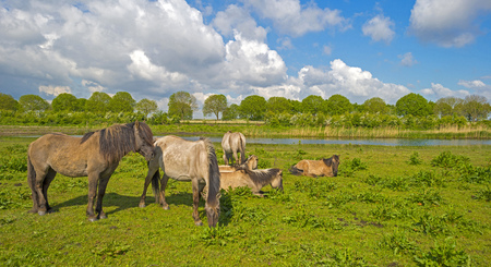 Herd of horses in naturally below a blue cloudy sky