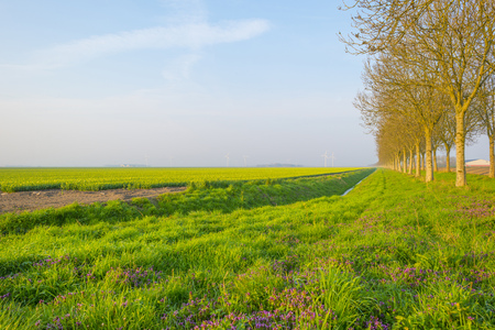 Photo pour Field with flowers below a blue sky in sunlight at sunrise in spring - image libre de droit