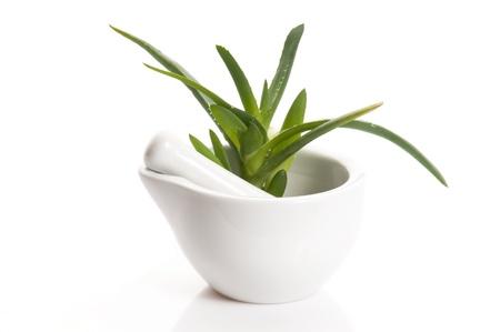 Photo pour Aloe vera - herbal medicine  - image libre de droit