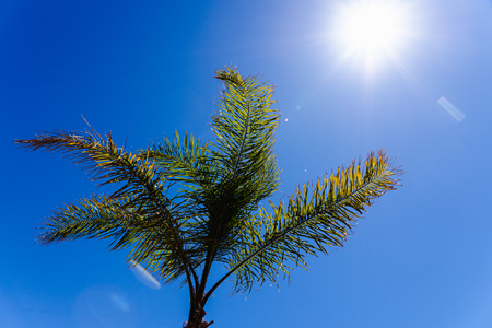 Photo for Background of the top of a palm tree seen from below against the midday sun. - Royalty Free Image