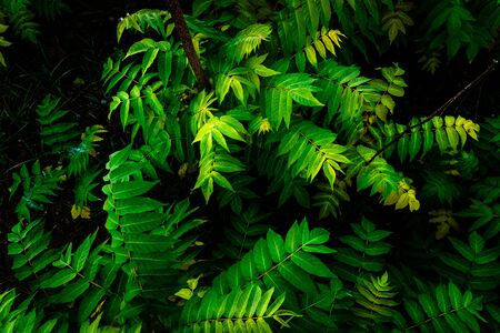 Photo pour Detail of the ground of a jungle, covered with green leaves. - image libre de droit