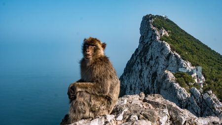 Monkey on Gibraltar Rock
