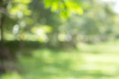 Foto de Natural green tree bokeh blur, lawn and trees, green background with beautiful lawn, shadow of bushes is smooth and clean grass with sunshine bokeh. - Imagen libre de derechos