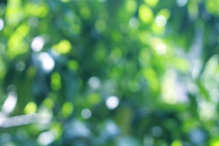 Photo for Blue green bokeh background And white from abstract leaves, nature, beautiful and bright - Royalty Free Image