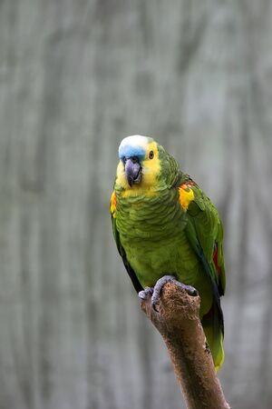 Photo pour Green parrot ara, on a tree - image libre de droit