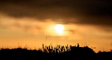 Photo pour Black Beach sunset landscape in Iceland, Europe - image libre de droit