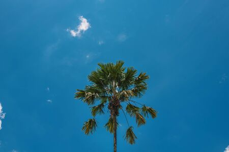 PALM TREE WITH BLUE AND SKY
