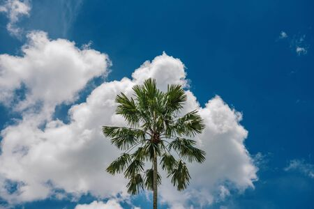 PALM TREE WITH SKY CLOUDS