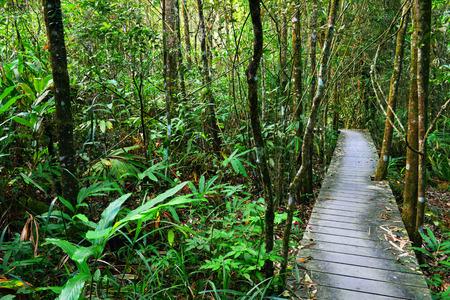 Tropical Rainforest Landscape Thailand Asia