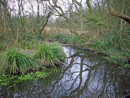 Stream running through winter woodland