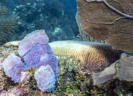 Foto de Coral garden in Caribbean off the coast of the island of Raotan - Imagen libre de derechos