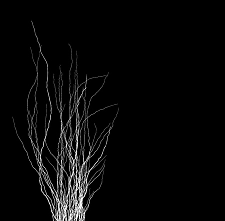 tree branches silhouette in white over black