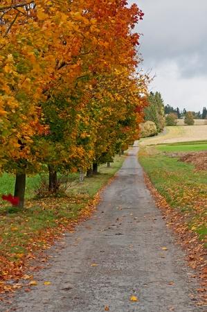 Photo pour Trees at the road during the autumn time. - image libre de droit