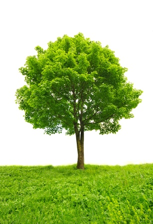 green tree in grass isolated