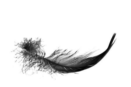 black feather floating towards ground, close up