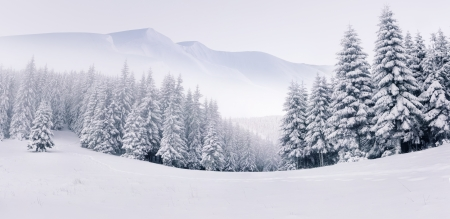Panorama of the foggy winter landscape in the mountainsの写真素材