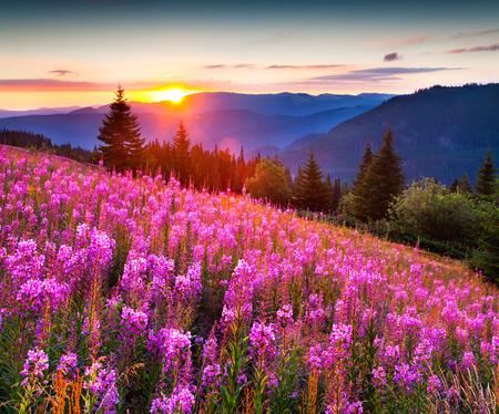 Foto de Beautiful autumn landscape in the mountains with pink flowers. Sunrise. - Imagen libre de derechos
