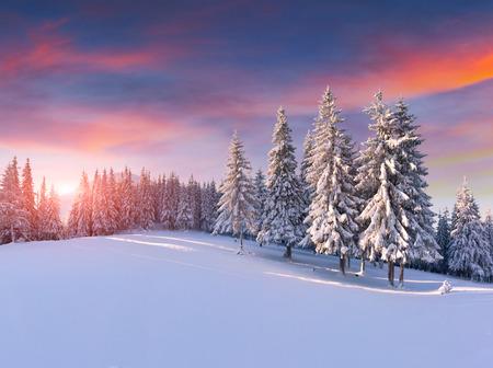 Foto de Colorful winter sunrise in the mountains - Imagen libre de derechos