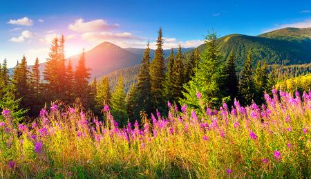 Photo pour Beautiful autumn landscape in the mountains with pink flowers. - image libre de droit