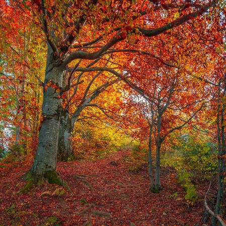 Dark road in the autumn mountains wood. Retro style.