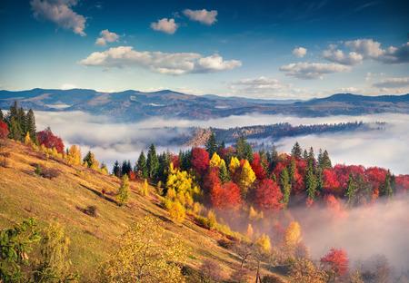Foto de Colorful autumn morning in the Carpathian mountains. Sokilsky ridge, Ukraine, Europe. - Imagen libre de derechos