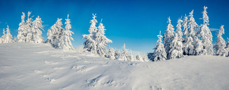Foto de Sunny morning panorama in the mountain forest. Bright winter landscape in the snowy wood, Happy New Year celebration concept. Artistic style post processed photo. - Imagen libre de derechos