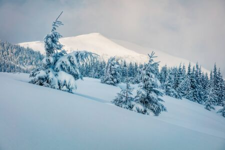 Photo pour Snowy winter view of mountain with snow covered fir trees, Carpathians, Ukraine, Europe. Dreamy outdoor scene, Happy New Year celebration concept. Orton Effect. - image libre de droit