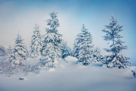 Photo pour Misty morning view of mountain forest. Fabulous outdoor scene with fir trees covered of fresh snow. Beautiful winter landscape. Happy New Year celebration concept. - image libre de droit