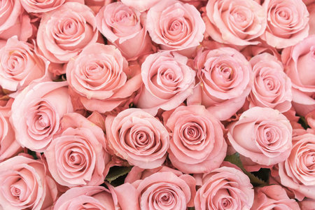 Photo pour Background of pink orange and peach roses. Fresh pink roses. A huge bouquet of flowers. The best gift for women. - image libre de droit