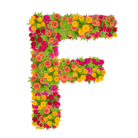Letter F alphabet made from zinnia flower ABC concept type as logo.Typography design with clipping path