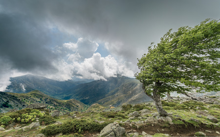 A windswept tree on a mountain ridge on the GR20 track in Corsica with dark cluds over distant mountains