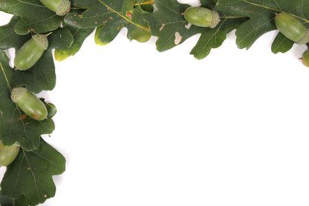 green oaks frame on the white background