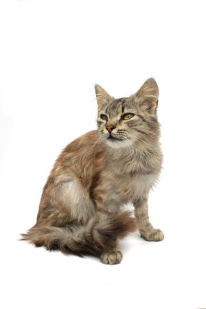 young nice cat on the white background
