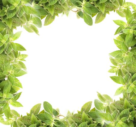 natural fresh herb  background from the mint