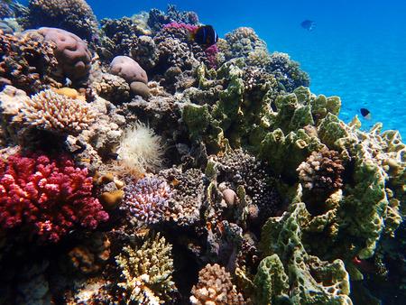 Photo pour coral reef in egypt as nice natural landscape - image libre de droit