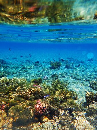 Photo pour coral reef in Red Sea as nice natural ocean background - image libre de droit