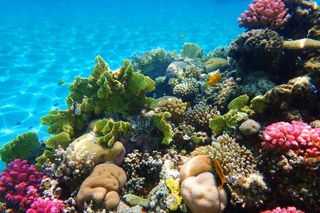 Photo pour coral reef in Egypt as very nice natural background - image libre de droit