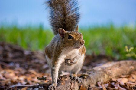 Foto de Squirrel Closeup - Imagen libre de derechos